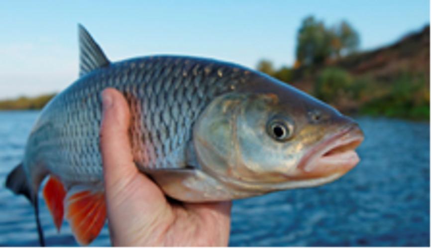 Tanrı'nın gönderdiği bir balık