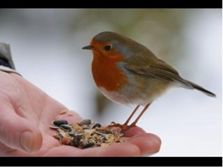 Yaratılışla barışma