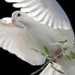 """""""Mesih'in kendisi barışımızdır"""""""
